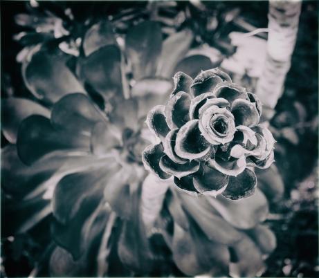 Botanic_Basquez_ Laila